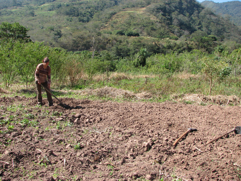 Juillet 2010 silvie 39 s adventures in south america - Labourer la terre ...